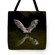 California Long-nosed Bat Flying Away Tote Bag
