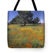 California Poppy And Eriophyllum Tote Bag