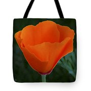 California Poppy Spectacular Tote Bag