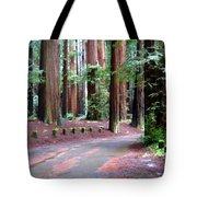 California Redwoods 3 Tote Bag