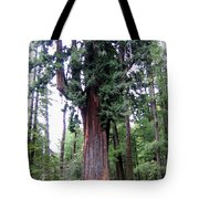 California Redwoods 6 Tote Bag