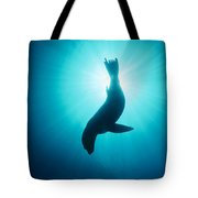 California Sea Lion  Channel Islands Np Tote Bag