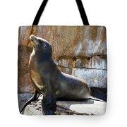 California Sea Lion Tote Bag