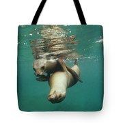 California Sea Lions Playing Sea Tote Bag