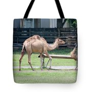 Camel And Emu Tote Bag