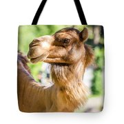 Camel Portrait Tote Bag