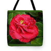 Camellia Japonica ' Dixie Knight ' Tote Bag
