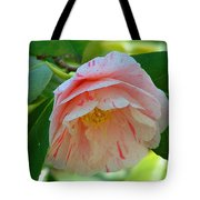 Camellia White With Pink Stripes Tote Bag