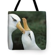 Campbell Albatrosses Courting Campbell Tote Bag