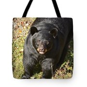 Can I Come Up? Tote Bag