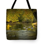 Canada Geese In Autumn Swimming On The Thornapple River Tote Bag