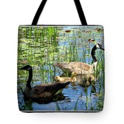 Canada Geese On Lily Pond At Reinstein Woods Tote Bag