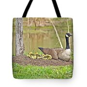 Canada Goose And Goslings Tote Bag