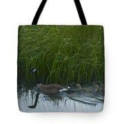 Canada Goose Family   #7453 Tote Bag