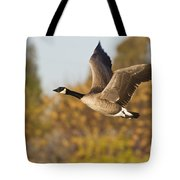 Canada Goose In The Skies  Tote Bag