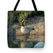 Canadian Goose Reflection Tote Bag