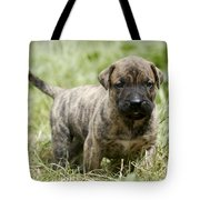 Canary Dog Puppy Tote Bag