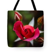 Candy Cane Roses Tote Bag