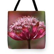 Botanica .. Candy Tote Bag
