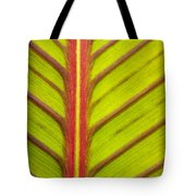 Canna Lily Red Stripe  Tote Bag