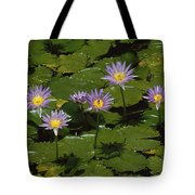 Cape Blue Water-lily Group Blooming Tote Bag
