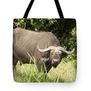 Cape Buffalo  Uganda Tote Bag