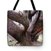 Cape Meares Octopus Tree Tote Bag