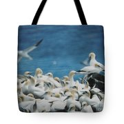 Cape St. Mary Ecological Resrve Tote Bag