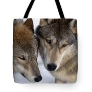 Captive Close Up Wolves Interacting Tote Bag