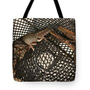 Captured Crawdaddies Tote Bag