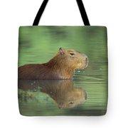 Capybara Wading Pantanal Brazil Tote Bag