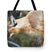 Caracal About To Jump Tote Bag