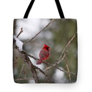 Cardinal - A Winter Bird Tote Bag