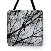 Cardinal Amongst The Branches Tote Bag