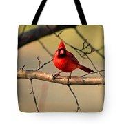 Cardinal Beauty Tote Bag