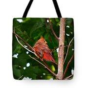 Cardinal Bird Baby Tote Bag