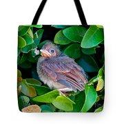 Cardinal Chick Tote Bag