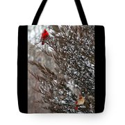 Cardinal Couple In Evergreen Tote Bag