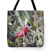 Cardinal In Bush Iv Tote Bag