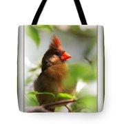 Cardinal In Dogwood Tote Bag