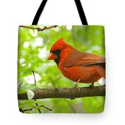 Cardinal In Red Tote Bag