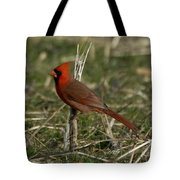 Cardinal In The Field Tote Bag