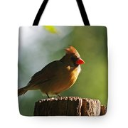 Cardinal Light Tote Bag