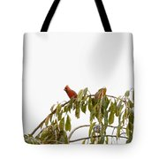Cardinal On A Branch Tote Bag