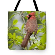 Cardinal Pictures 123 Tote Bag