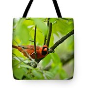 Cardinal Pictures 138 Tote Bag