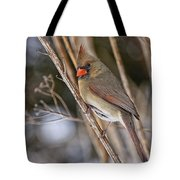 Cardinal Pictures 50 Tote Bag