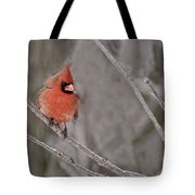 Cardinal Pictures 97 Tote Bag
