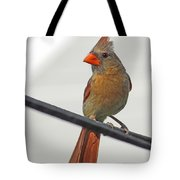 Cardinal Young Female Tote Bag