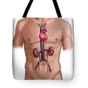 Cardiovascular And Renal Systems Tote Bag